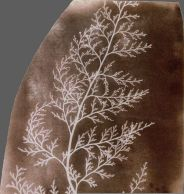 1834_william-fox-talbot_vegetal-serie_03