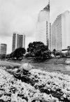 SALGADO SALGADO_1996_Djakarta